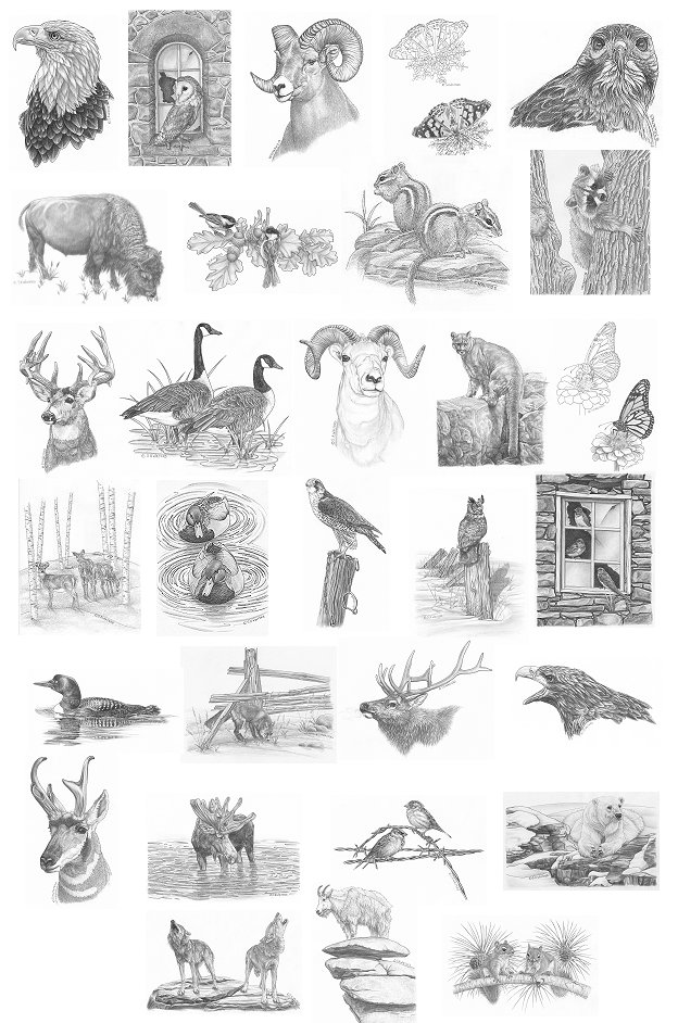 Wildlife Wood Burning Patterns Free